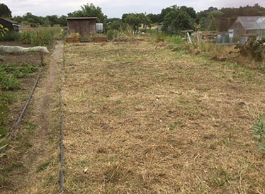 How the Age UK allotment plot used to look